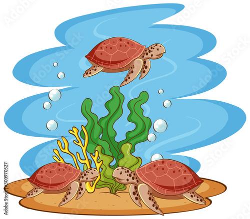 Poster Jeunes enfants Sea turtles swimming in the ocean