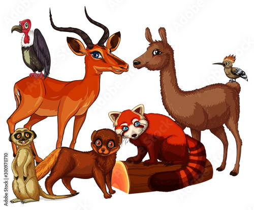 Papiers peints Jeunes enfants Isolated picture of many animals