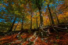 Rain Forest Trees In Autumn