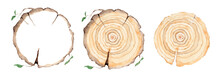Wood Slice. Tree Rings. Waterc...