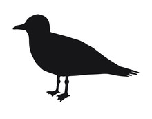 Vector Black Sea Gull Silhouette Isolated On White Background