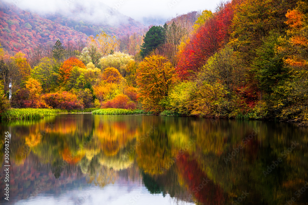 Fototapety, obrazy: Small lake surrounded by forest with colorful plants at autumn cloudy and foggy day. Lake Grza near the Paracin in Serbia.