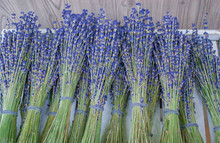 Group Of Delicate Dried Lavender Bouquets Displayed For Sale, Selective Focus