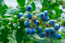 Healthy Food And Antioxidant, ...
