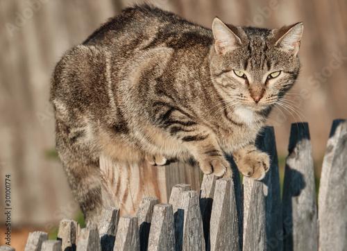 Feral cat, New Rochelle