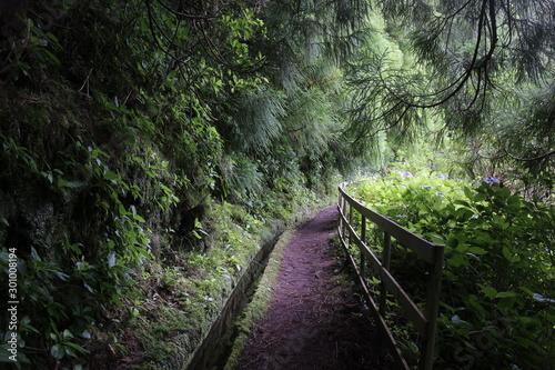 Spoed Fotobehang Weg in bos Levada, île de Faial (Les açores)