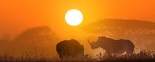 Two White Rhinos At Sunset