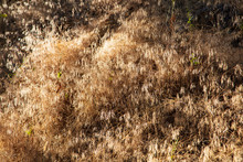 As The Desert Sun Sinks Lower In The Sky The Tall Grasses Found Along Hog Canyon Trail In Dinosaur National Monument Glisten
