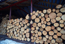 Chopped Logs Of Firewood Piled Under The Roof. Fuel For Stove Heating. Wooden Firewood Stacked. Natural Wood Background. Stacked Birch Firewood. Pile Of Chopped Dry Logs. Wooden Storage Of Birch