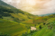 Beautiful Dramatic View Of Growing Golden Paddy Rice Field With Stream Flows Through Into Mu Cang Chai Local Village On Harvest Season, Mu Cang Chai, Yenbai , Northwest Of Vietnam