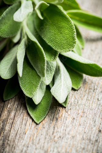 Fototapeta Bunch of fresh green sage leaves on the rustic background. Selective focus. obraz