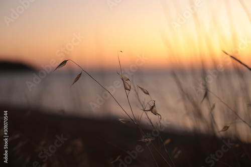 Foto auf Leinwand Lachs nature background water and sunset dawn romantic mood
