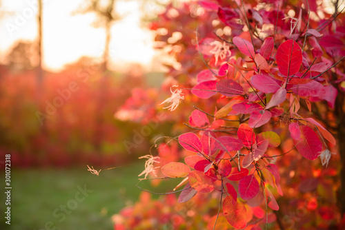 Foto op Plexiglas Herfst Beautiful autumn landscape with yellow trees and sun
