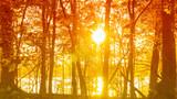 Fototapeta Fototapety na ścianę - A scenic autumn view of sunlight shining through trees on a lake shore.