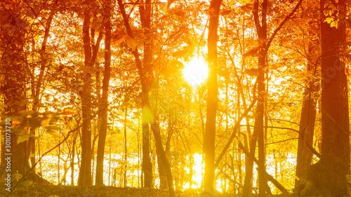 Fotografía  A scenic autumn view of sunlight shining through trees on a lake shore