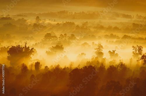 Montage in der Fensternische Honig Autumn landscape of the beautiful forest, at sunrise