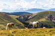 Alpenpanorama mit Pferden