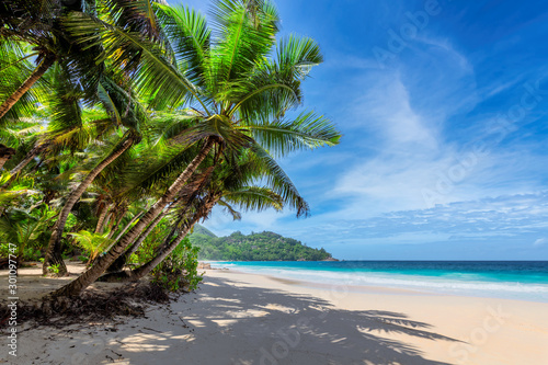 Foto auf Leinwand Palms Sunny beach with coconut palms and tropical sea. Summer vacation and tropical beach concept.