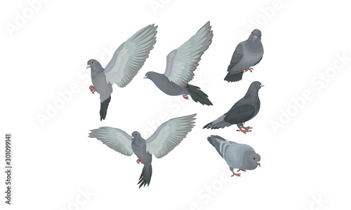 Bluish Grey Pigeons In Motions Vector Illustration Set Wallpaper Mural