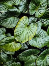 Beautiful Leaf Pattern