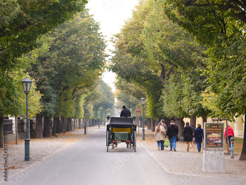 Vászonkép  October 19, 2018 Austria. Vienna. tree alley and receding cart