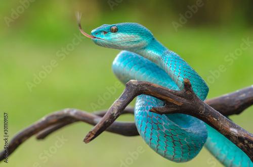 lizard on tree Canvas Print