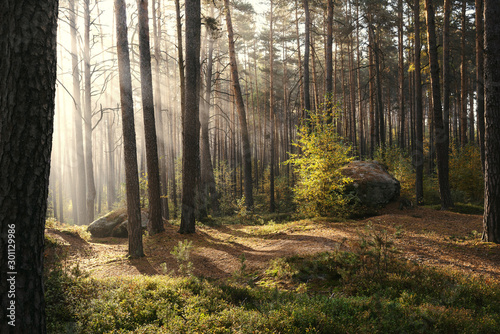 Sunlight passing through trees in forest - 301129986