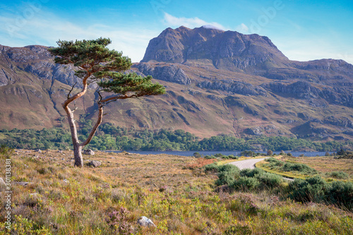 caledonian tree with siloch mountain in the scottish highlands Fototapet