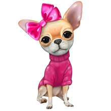 Little Chihuahua Dog With Pink...