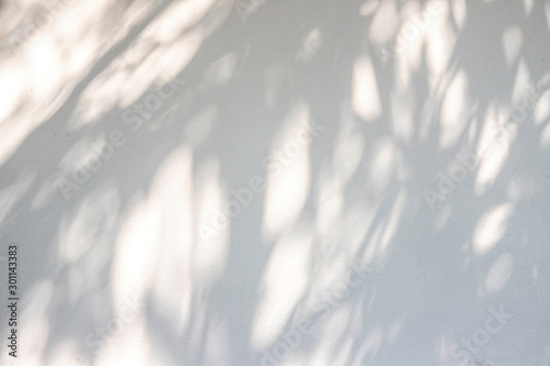 Poster Printemps Shadow of leaf on white wall background