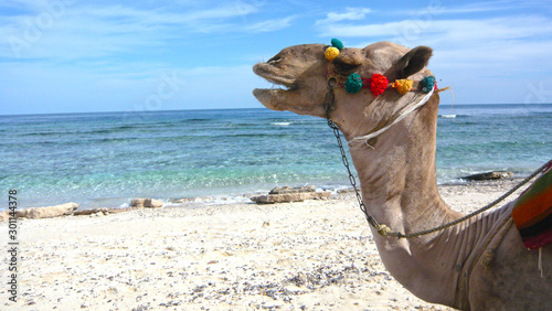 Just a Camel at the beach