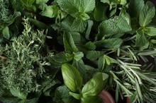 Fresh Herbs. Basil, Rosemary, Thyme, Mint, Dill.