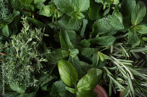Carta da parati Fresh herbs. Basil, rosemary, thyme, mint, dill.