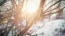 Sunlight Shining Through The B...