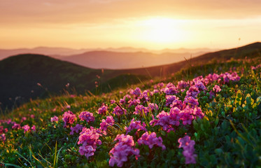 Fototapeta Wschód / zachód słońca Nature and mountain background. Majestic Carpathians. Beautiful landscape. Breathtaking view