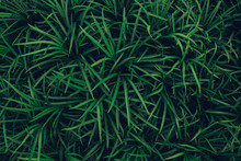 Green Leave Texture Background