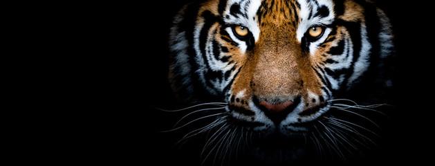 Tigar s crnom pozadinom