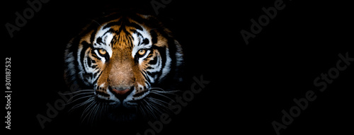 Photo Tiger with a black background