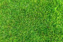 Artificial Green Grass Backgro...