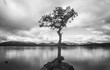Leinwanddruck Bild - loch lomond lone tree in water with smooth water in black and white.