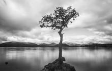Loch Lomond Lone Tree In Water...