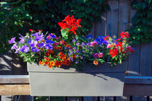 Annual Flowers On A Railing Box