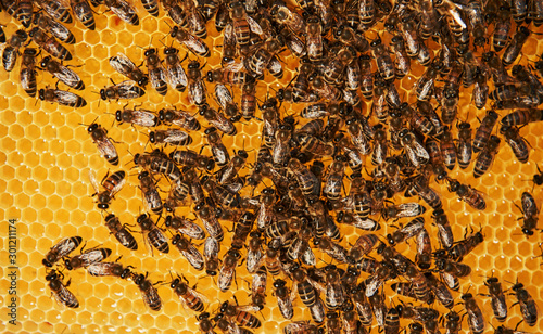 Photo Detailed view of honeycomb full of bees. Conception of apiculture