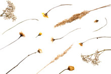 Dried Summer Flowers Laid Out On A White Background