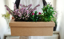 Close Up Of Woman Holding Flowers In A Cardboard Box
