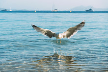 Flying Seagull Landing Near Se...