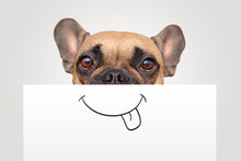 Funny Brown French Bulldog Dog...