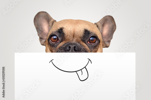 Foto auf Leinwand Französisch bulldog Funny Brown French Bulldog dog with half of face covered with white paper with painted on happy mouth with tongue sticking out