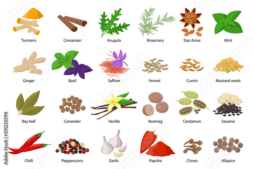 Obraz Large set of spices vector illustrations in flat design isolated on white background. Spices and herbs icons collection. - fototapety do salonu