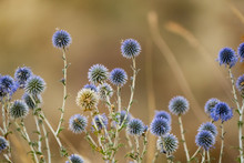 Close Up Picture Of Colorful Dry Flowers In The Steppe